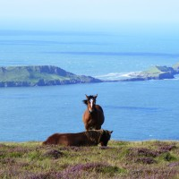 The Gower holiday accommodation